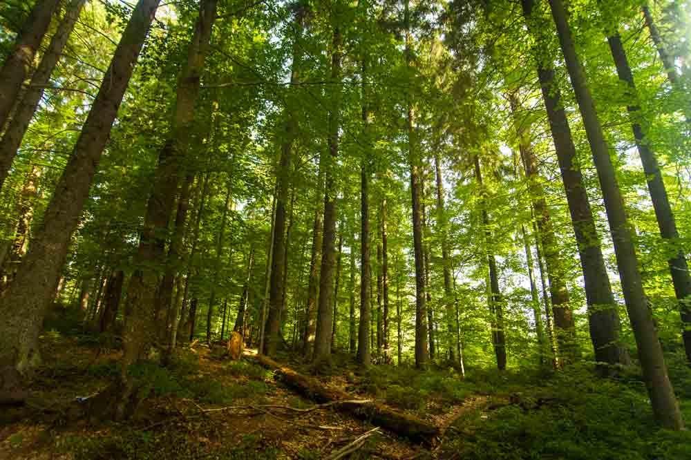 Le risque de contracter la maladie de Lyme via une tique est accru en forêt
