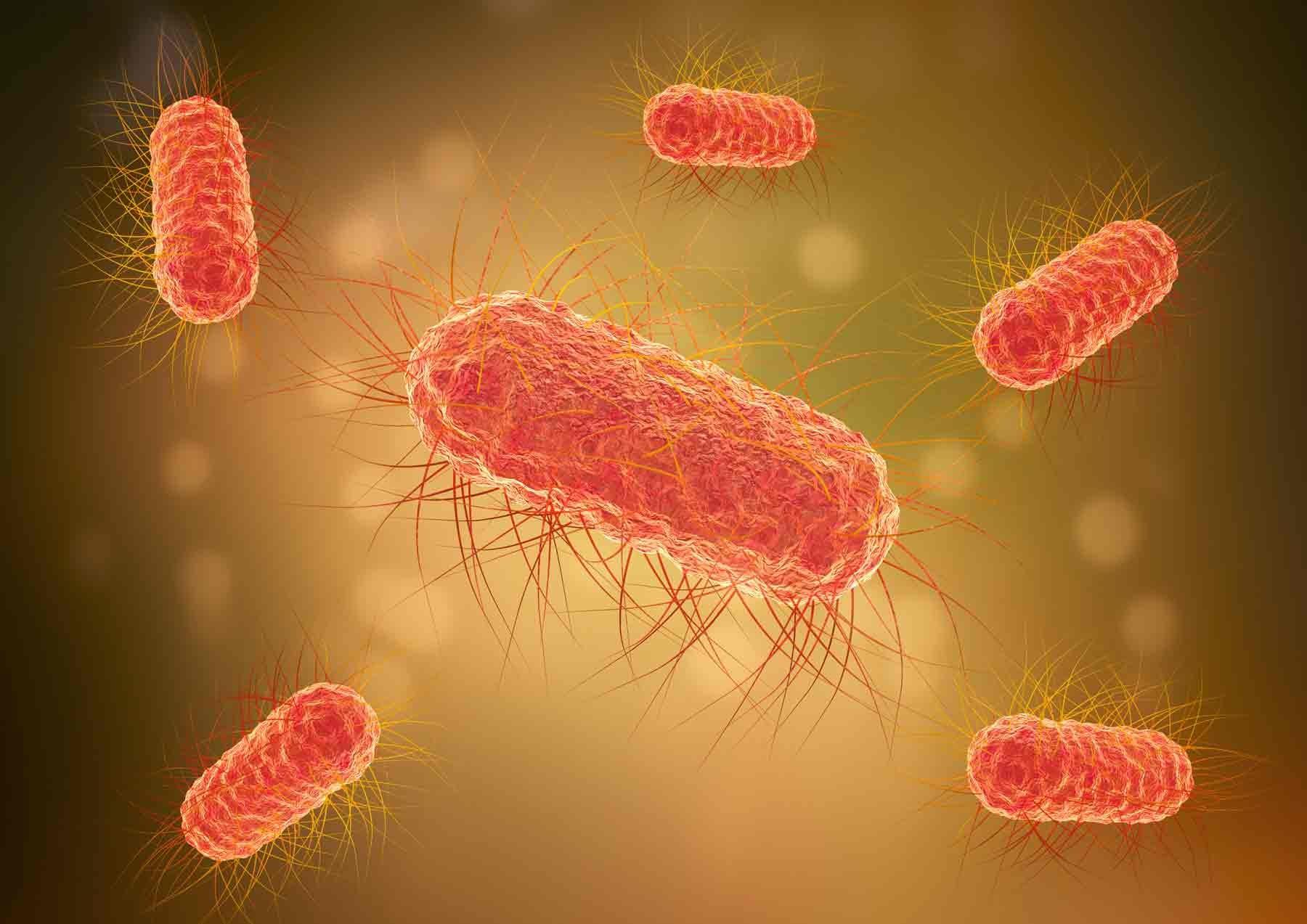 Le SIBO se caractérise par la présence de bactéries dans l'intestin grêle